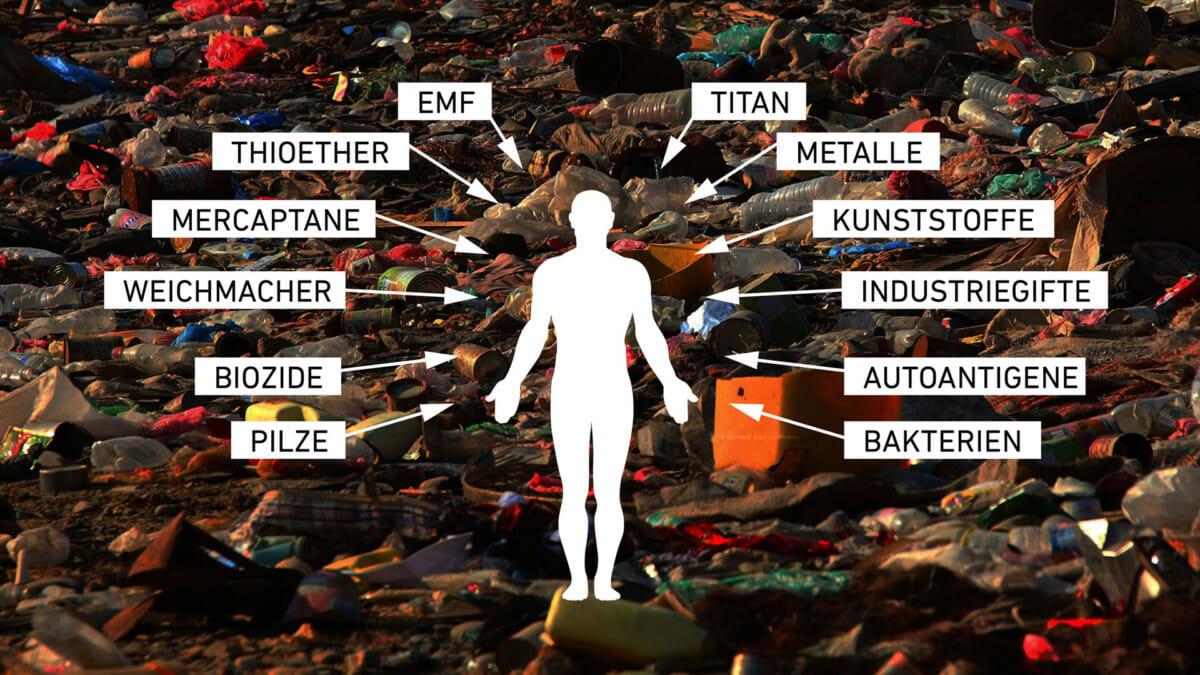 Biochemie der Entgiftung