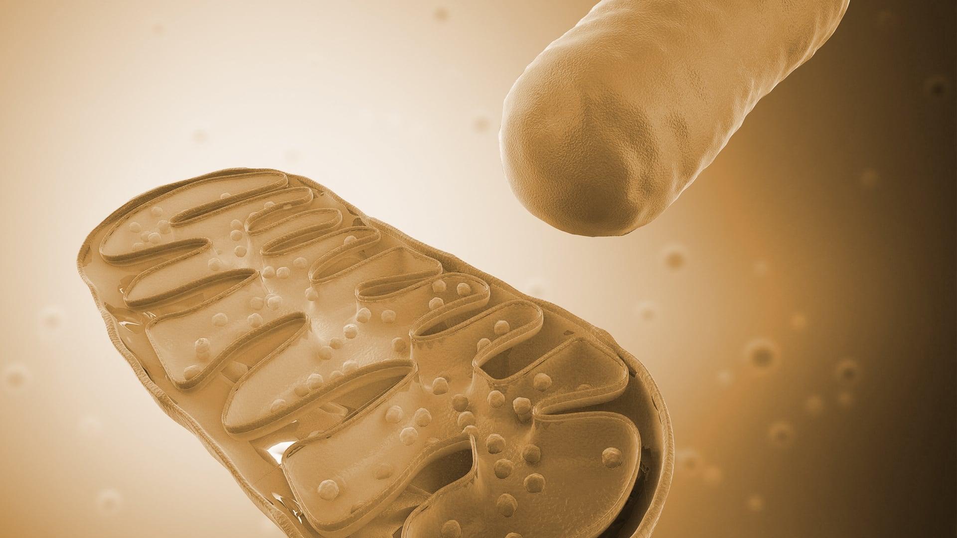 Mitochondrientherapie - Praxis Abadi - Heilpraktiker Frankfurt